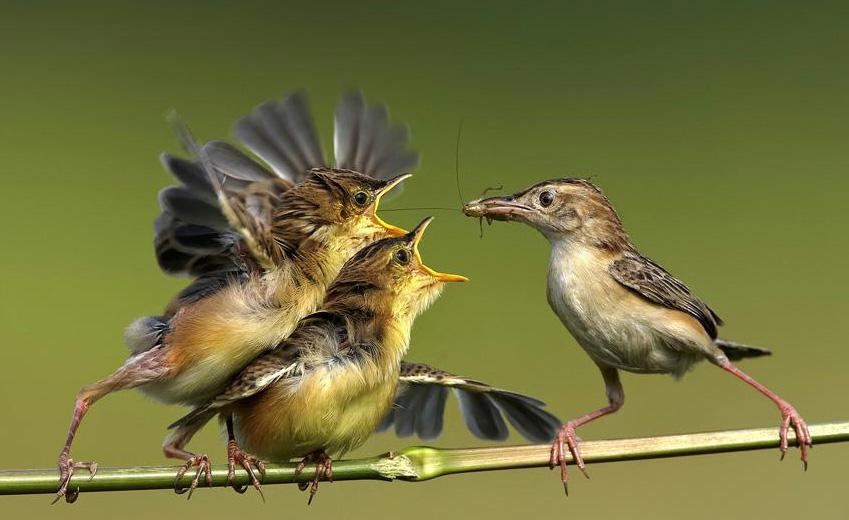 [动物世界]神奇的地球:飞禽走兽摄影选-科技频道